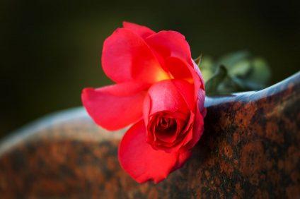 Rose monument funéraire